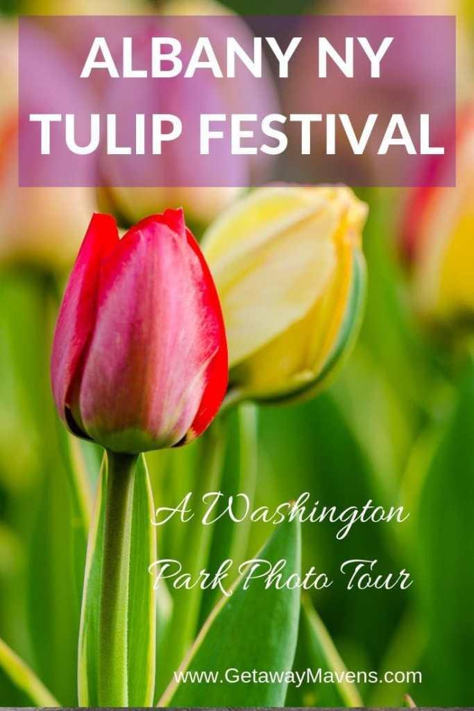 Albany NY Tulip Festival Pinterest Pin