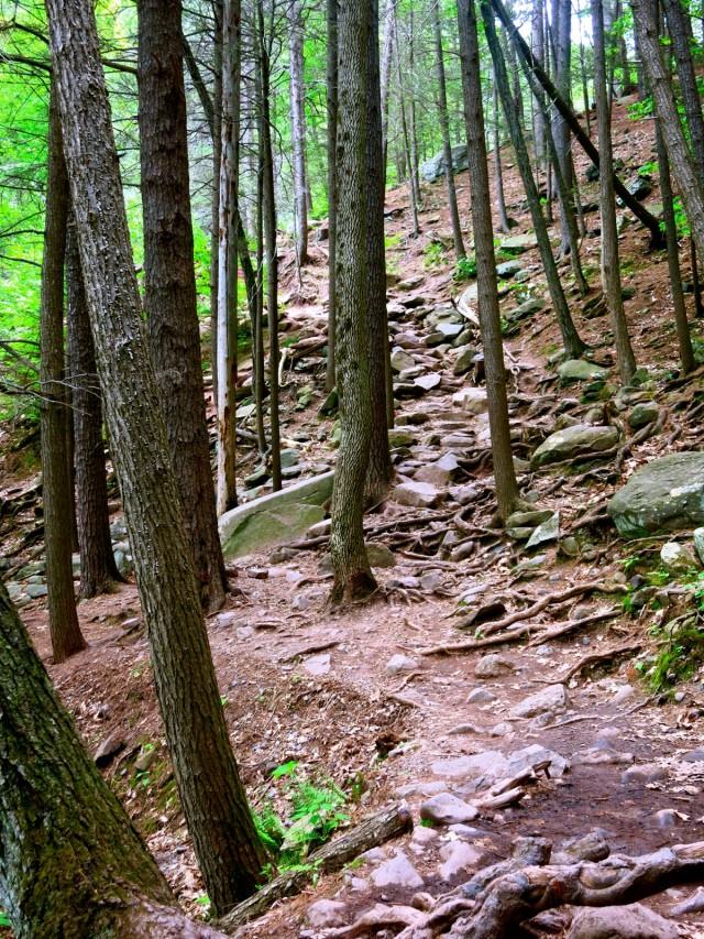 Trail to Kaaterskill Falls