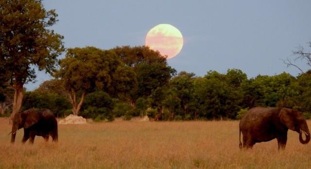 Elephants with Moon