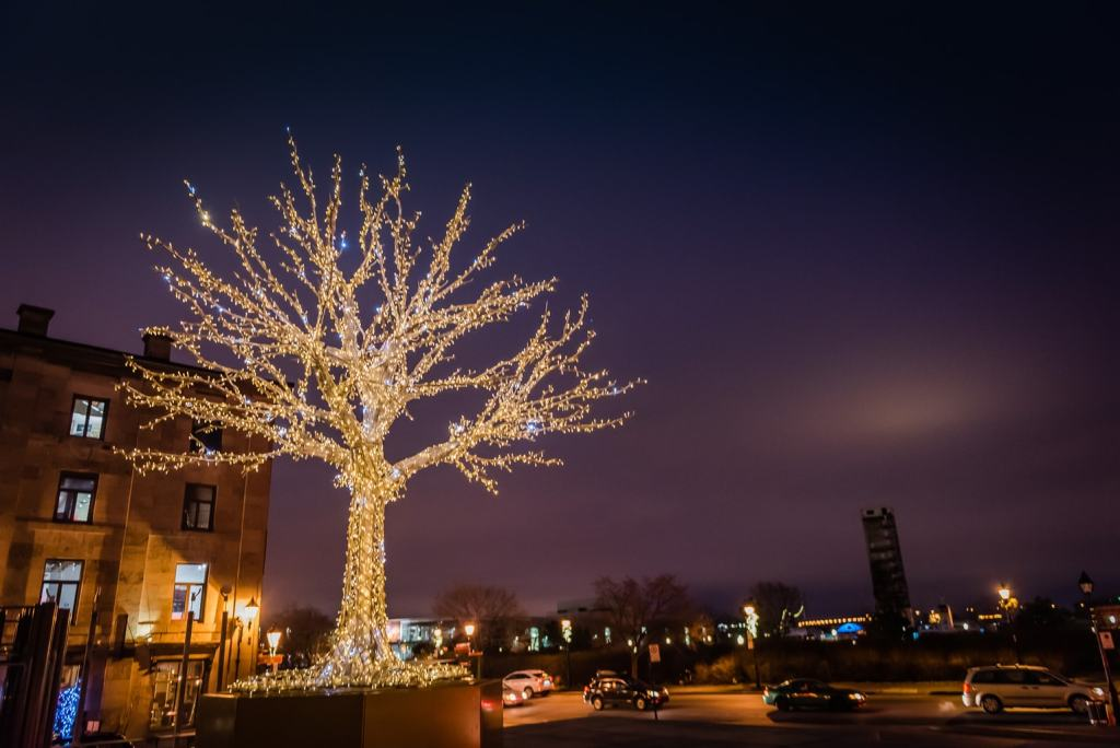 Bare tree covered in lights in Old Montreal.
