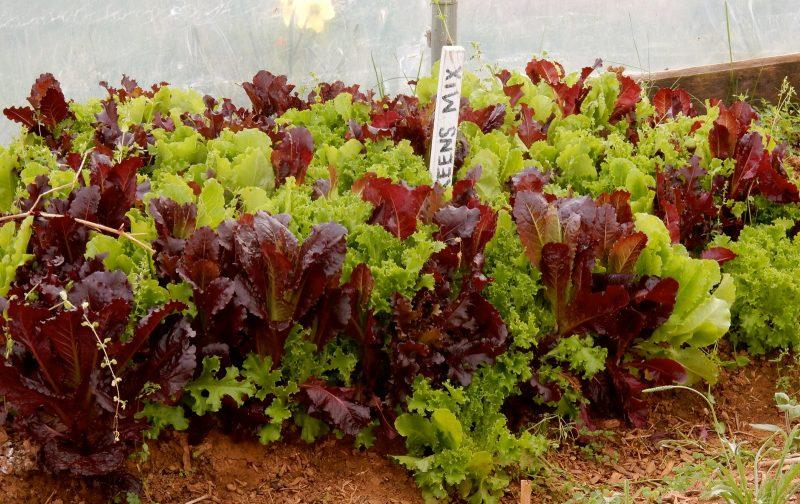 Airlie Garden fresh, Airlie Resort VA