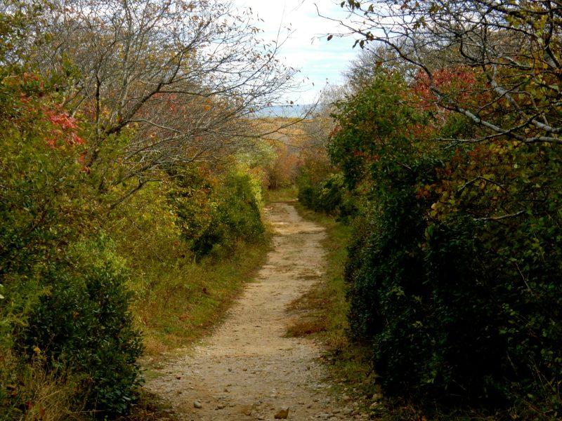 shadmoor-state-park-montauk-ny