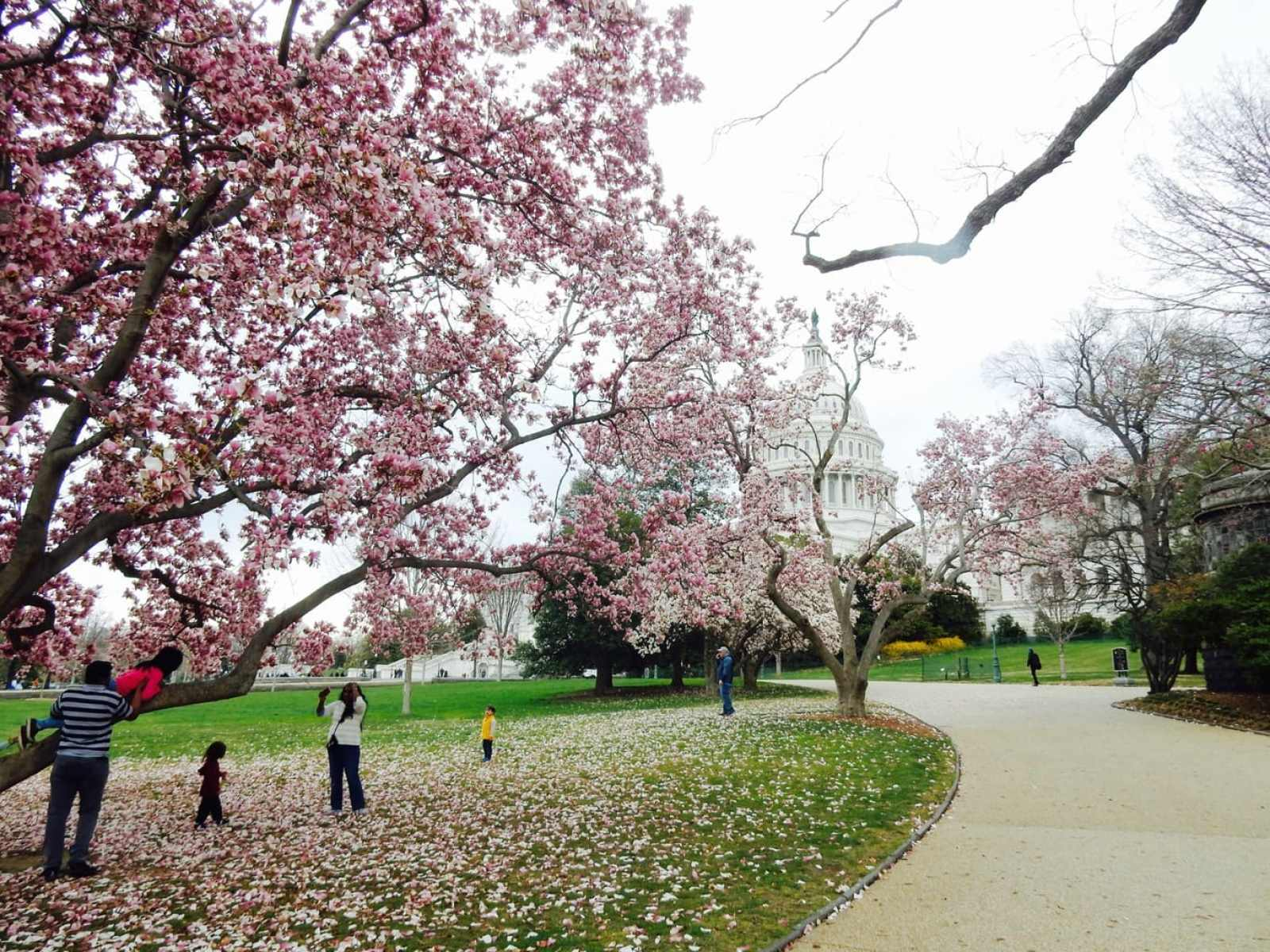 Cherry blossom season is one of the best times to plan for romantic getaways East Coast.