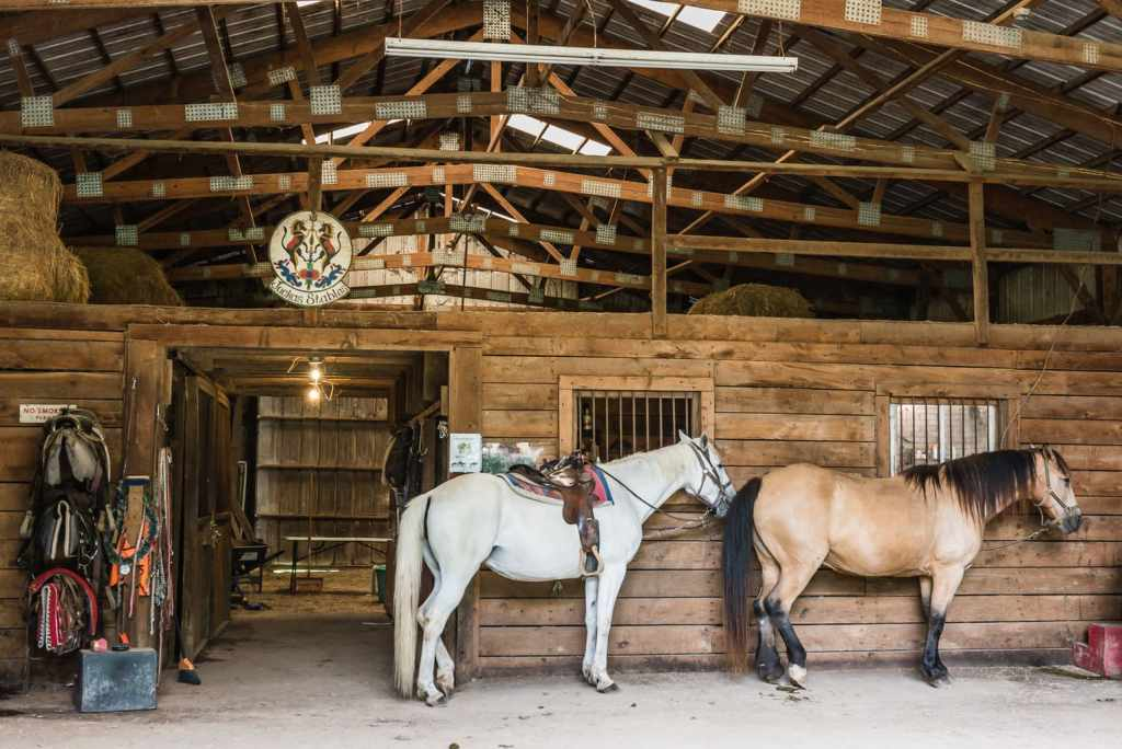 Horses in the barn at Juckas Stables.