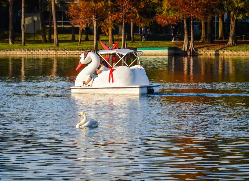 A single white swan glides in front of swan boat pedaled by a couple at Lake Eola in Florida.