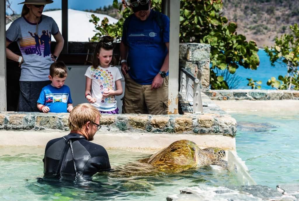 Coral World Sea Turtle Exhibit