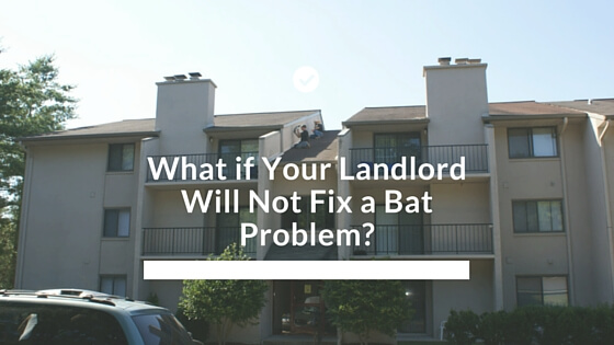 What If Your Landlord Will Not Fix A Bat Problem