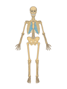 human skull landmarks diagram landscape it skeletal system • anatomy & function