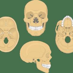 Unlabeled Skull Diagram Inferior View 2003 Jetta Water Pump Sphenoid Bone