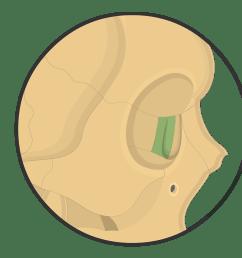 lacrimal bone diagram [ 1200 x 831 Pixel ]