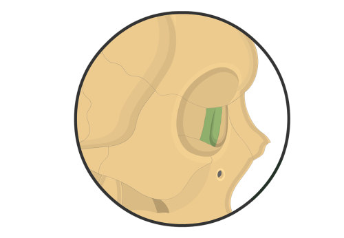 small resolution of lacrimal bone diagram