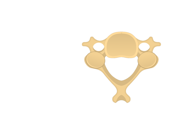 cervical vertebrae diagram math tree generator anatomy unlabelled image of the inferior view a vertebra