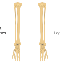 tibia and fibula bones quiz anterior markings [ 1875 x 1250 Pixel ]