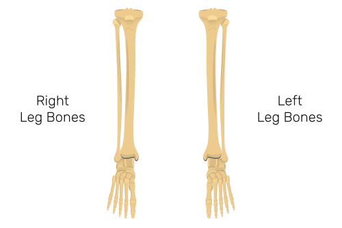 small resolution of tibia and fibula bones quiz anterior markings