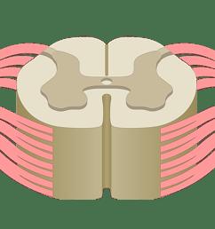 label ear diagram quiz [ 1615 x 630 Pixel ]