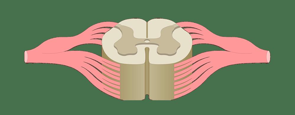 medium resolution of label ear diagram quiz