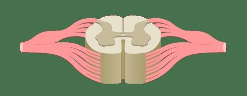 small resolution of label ear diagram quiz