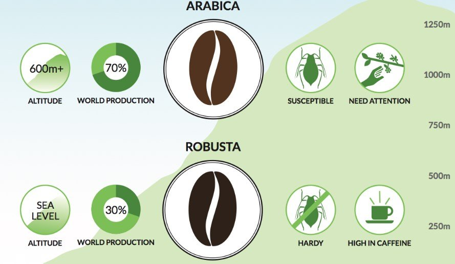 Image Result For What Is The Difference Between Arabica And Robusta Coffee Beans