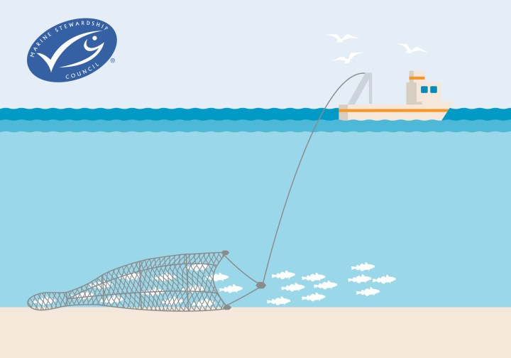 Bottom trawling and it's impact on marine life and their ecosystems. Bottom trawling is not a sustainable fishing method.