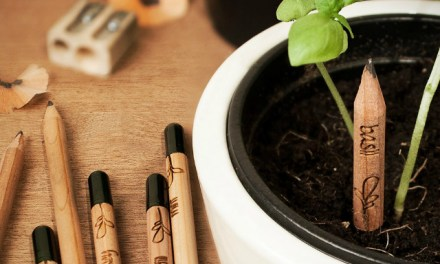 Sprout Pencil Stubs Begin New Lives as Plants