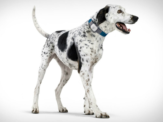 Tagg Pet Tracker Monitors Your Pet 24/7