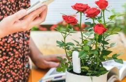 Xiaomi Flower Monitor Keeps your Houseplants Happy