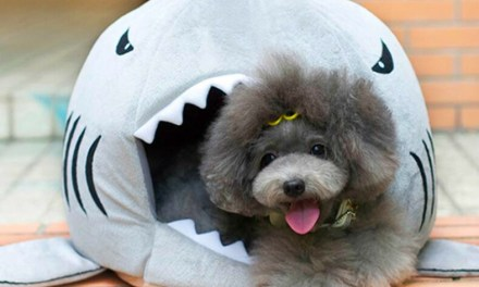 Shark Shaped Kennel has your Pet for Dinner