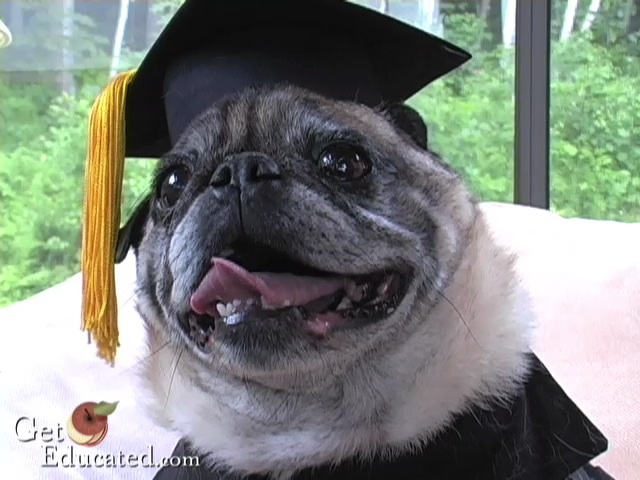 GetEducated.com mascot and pet, Chester Ludlow, received an online MBA from by Rochville University—an online college that offers distance learning degrees based on life and career experience.