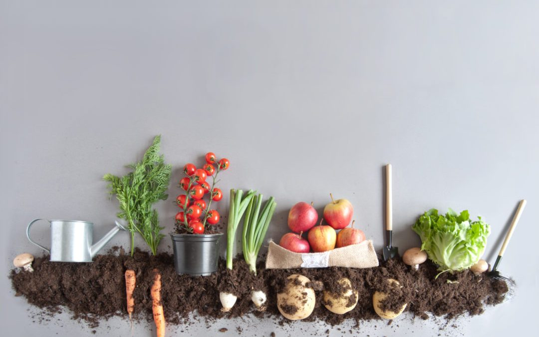Organic Living – How To Lead A Healthier Lifestyle At Home