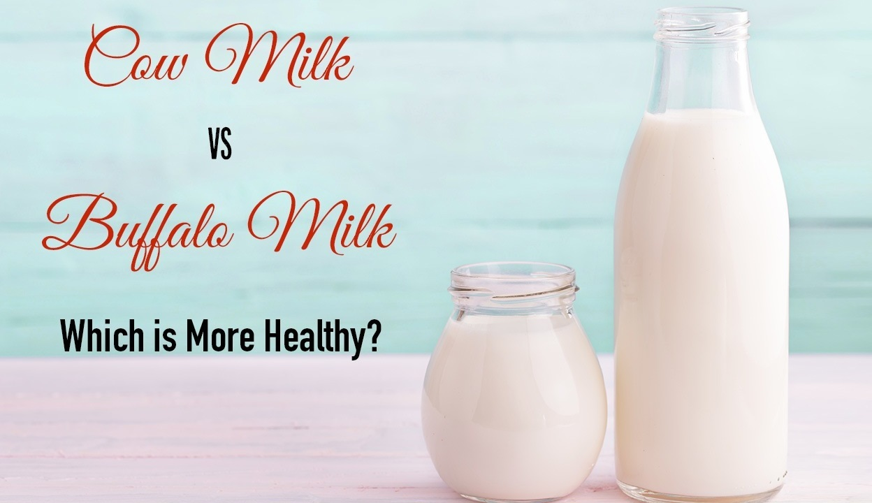 cow milk vs buffalo milk