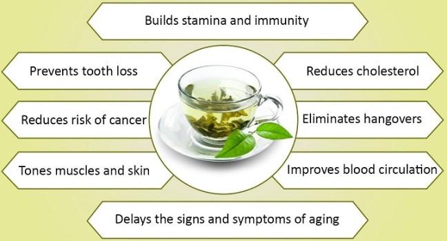 green tea weight loss: green tea benefits