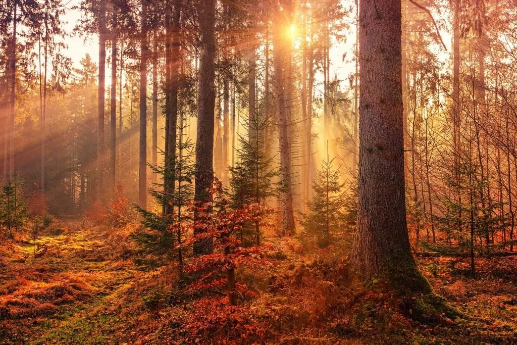 Foto van bomen in een bos met de zonsopkomst op de achtergrond.