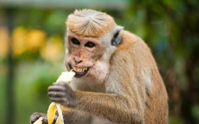 How do you improve your loss rate? Don't be a monkey.