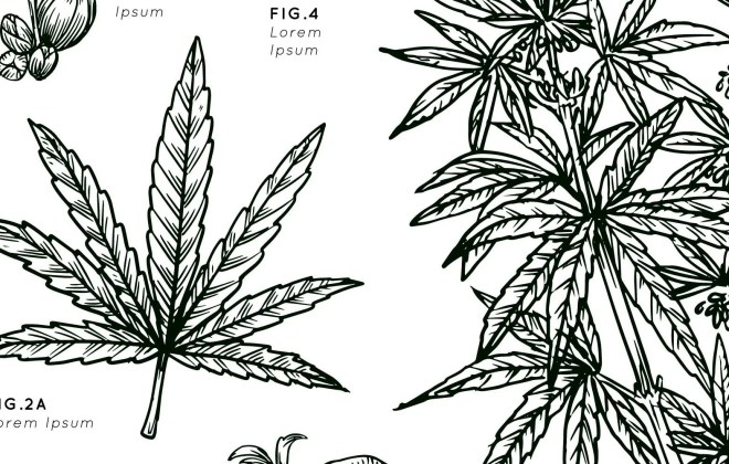 Black and white hand drawn cannabis plant in white background