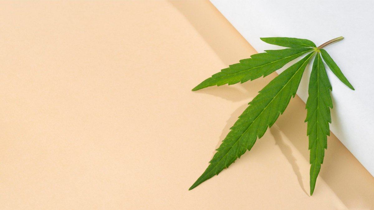 cannabis and flavonoids