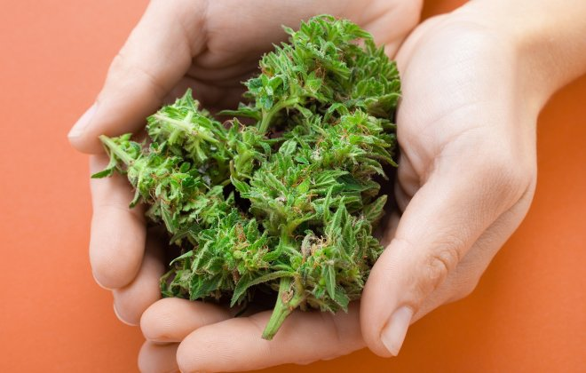 cannabis strains for weight loss