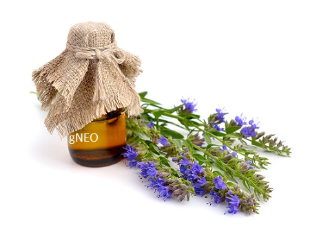 Organic Hyssop Essential Oil