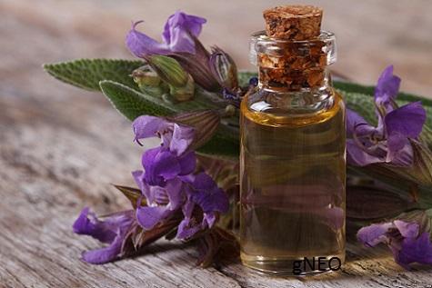 Organic Spanish Sage Essential Oil