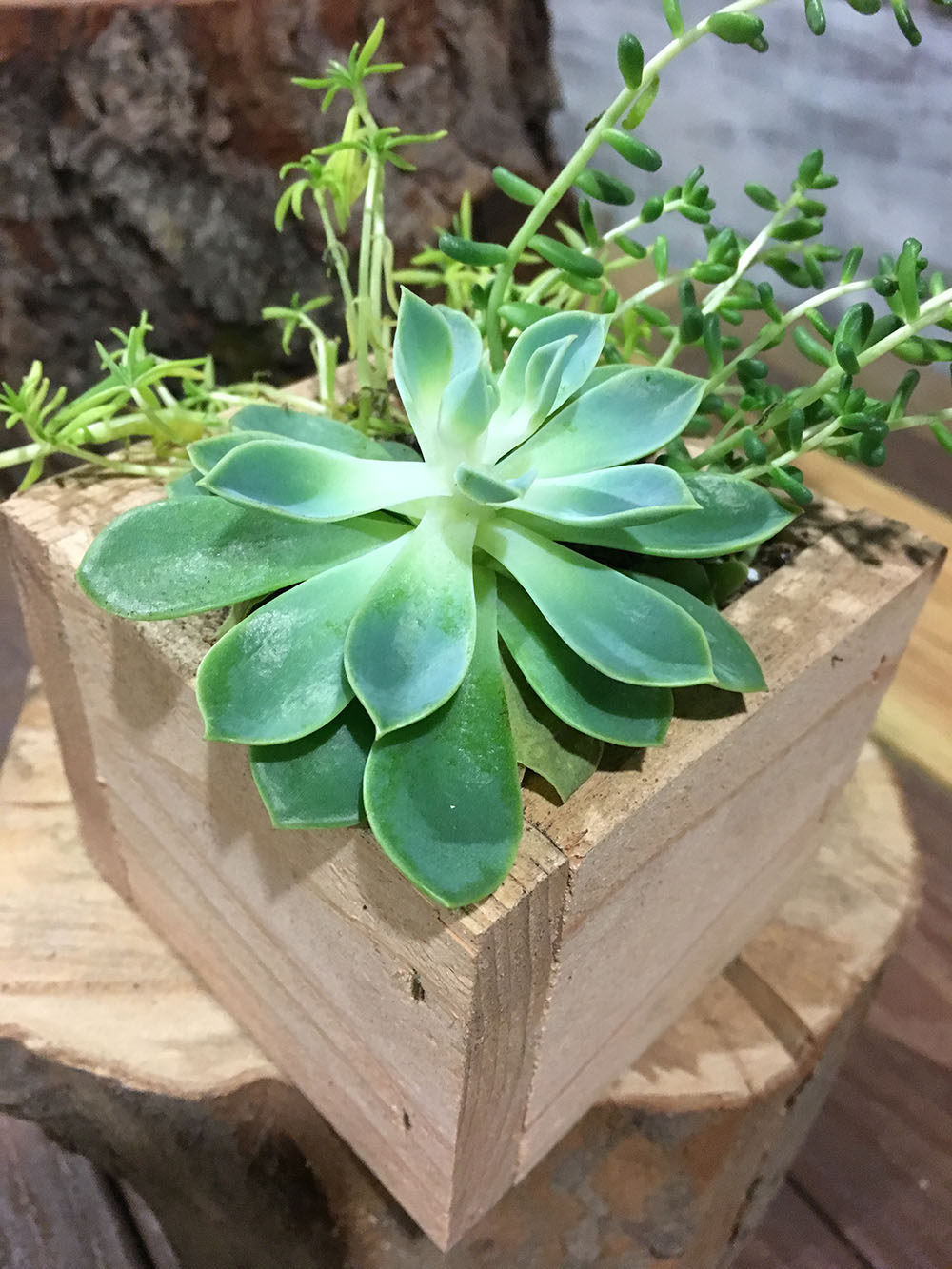 Succulent Planter Box  Pistol Petes