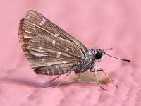 Getting Rid Of Carpet Moths Naturally | www.stkittsvilla.com