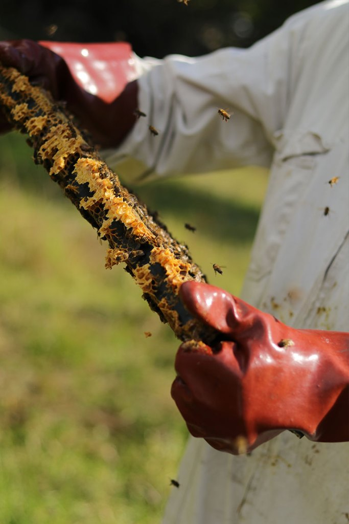 honey bees farming
