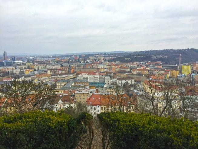 Brno Dragons