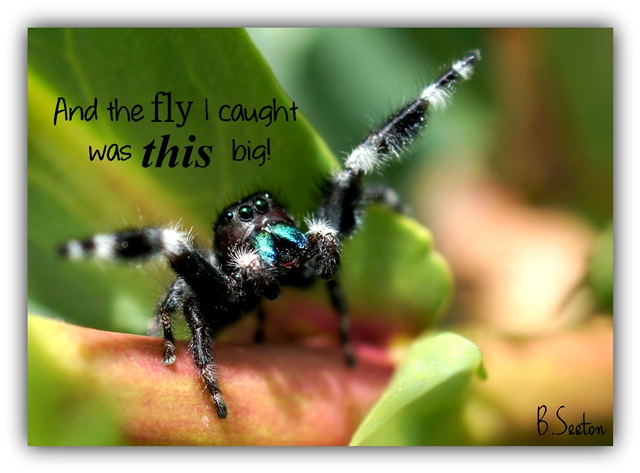 Image result for jumping spider cute