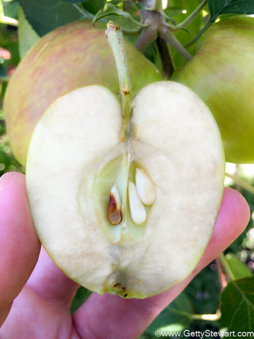 Apples How Those You