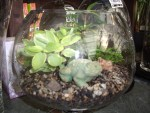 terrarium gardening. plants in a bowl