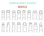 Human fingernail types Vector illustration