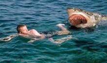 כרישים עליך עמלץ: המדריך המקוצר לגולש לזהירות והישרדות מתקיפות כרישים
