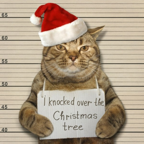 Cat Christmas Hacks   How To Keep Them out of a Christmas Tree #Christmastree #pets #cathacks #catlovers