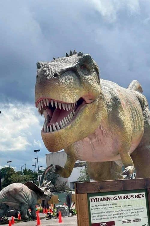 T-rex dino safari