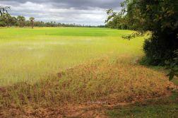AngkorWatTapinaklari13